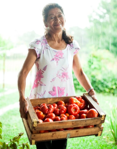 tomate platense 3